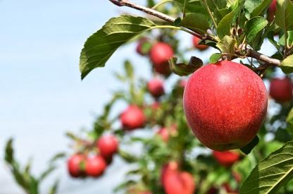 Apfel Wege zum nachhaltigen Konsum